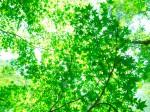 木漏れ日の緑