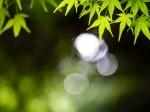 水滴と葉っぱ数枚