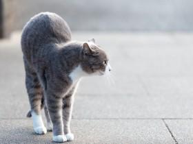 ストレスフルな猫