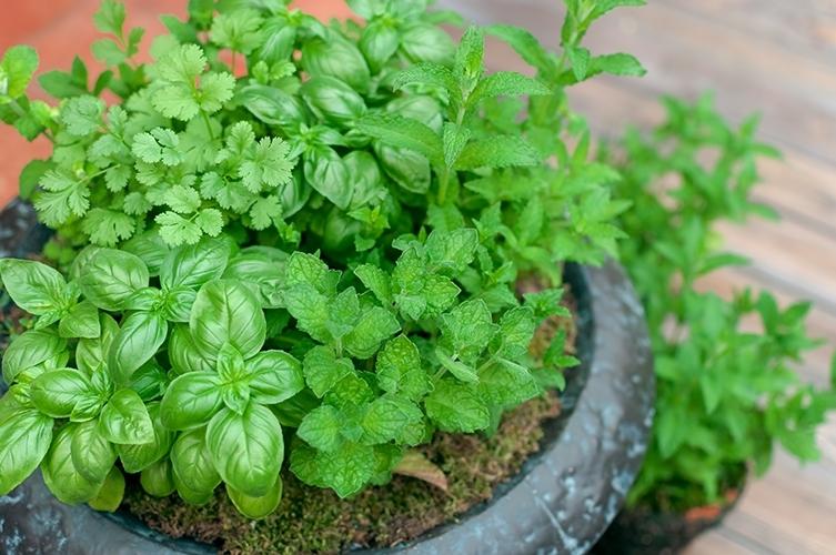鉢植えの緑