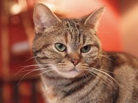 一匹のオス猫