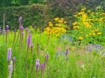 雑草と紫と黄色の花