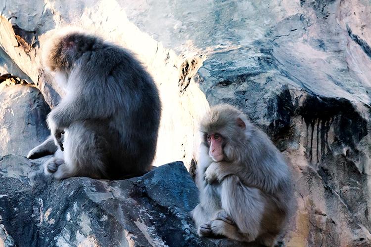 お猿さん2匹