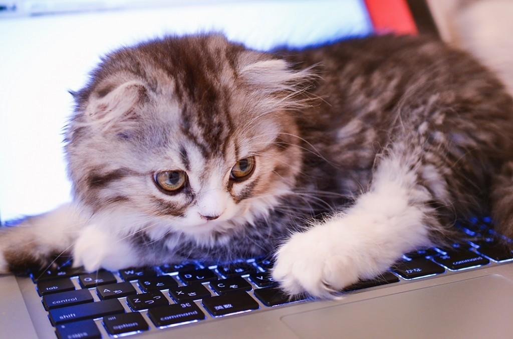 ノートパソコンに乗る猫