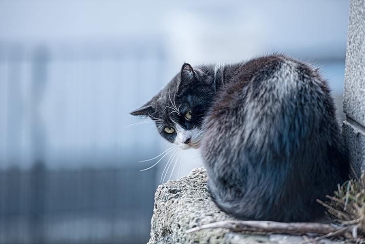 振り向く塀の上の猫