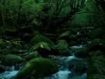 原生林の中の小川