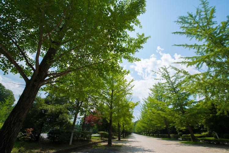 木々と続く道