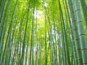 竹林の画像