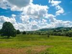 草原と1本の木と雲