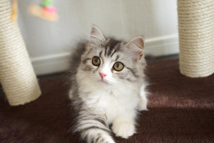 斜め上を見る子猫