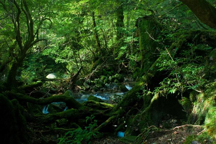 原生林の奥