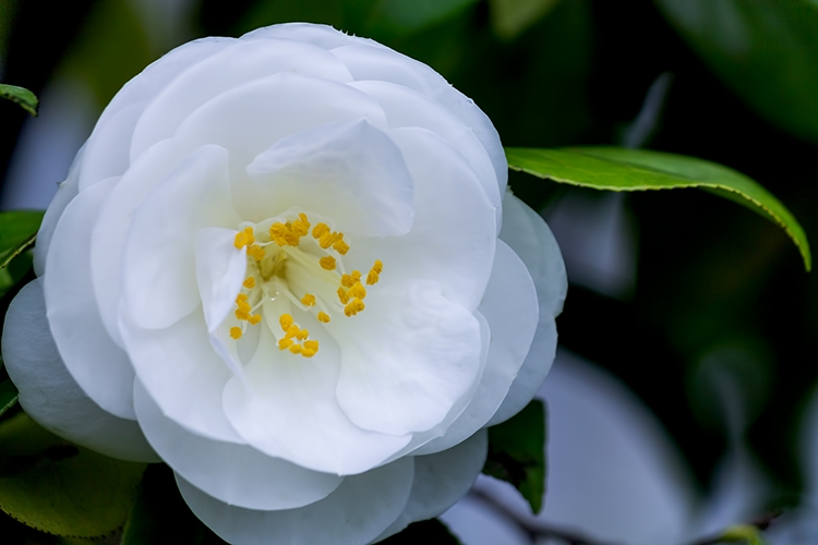 白い花1リンと葉っぱ