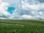 草原と少しあつめの雲