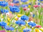 青色の花が数本