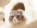 顔を出している猫