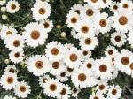 白い花が無数に