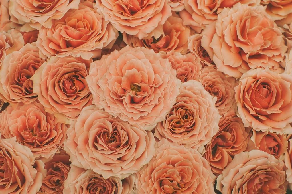 枯れた色合いの赤いバラ