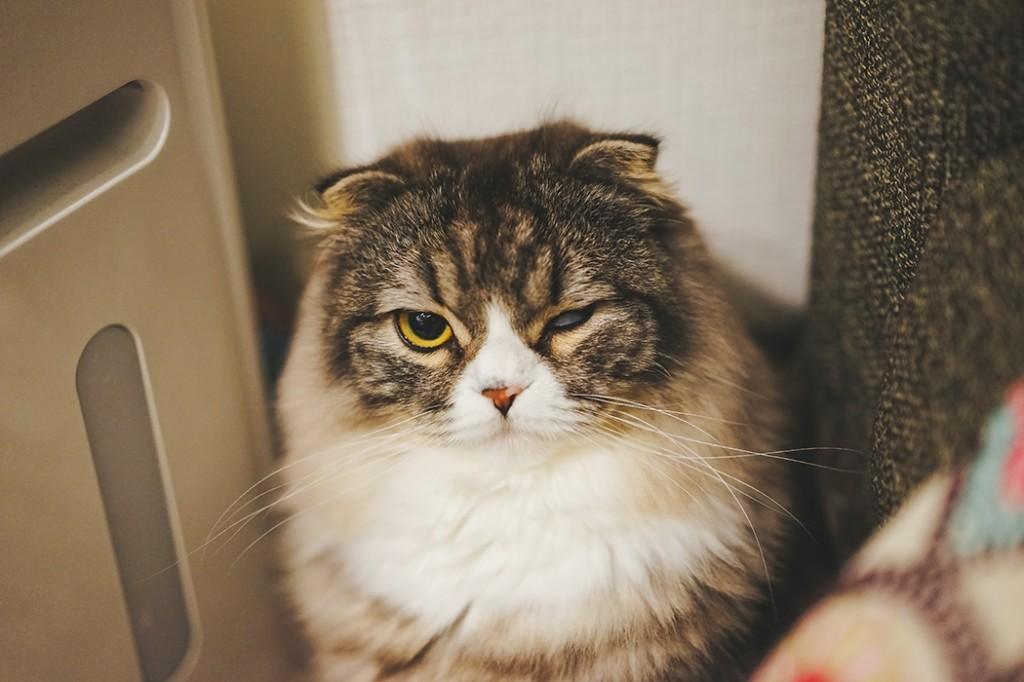 片目を閉じる猫